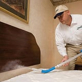 Bed bugs pest control services