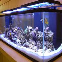 Marine Aquariums