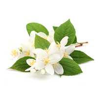 Flower Extract