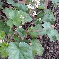 Alum plant