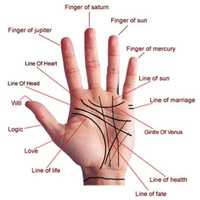 Palmistry Solution