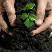Non toxic fertilizer