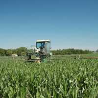 Strobilurin fungicides