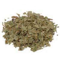 Graviola leaves