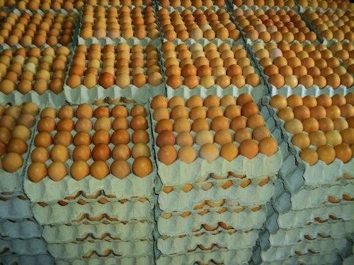 Fresh Table Chicken Eggs
